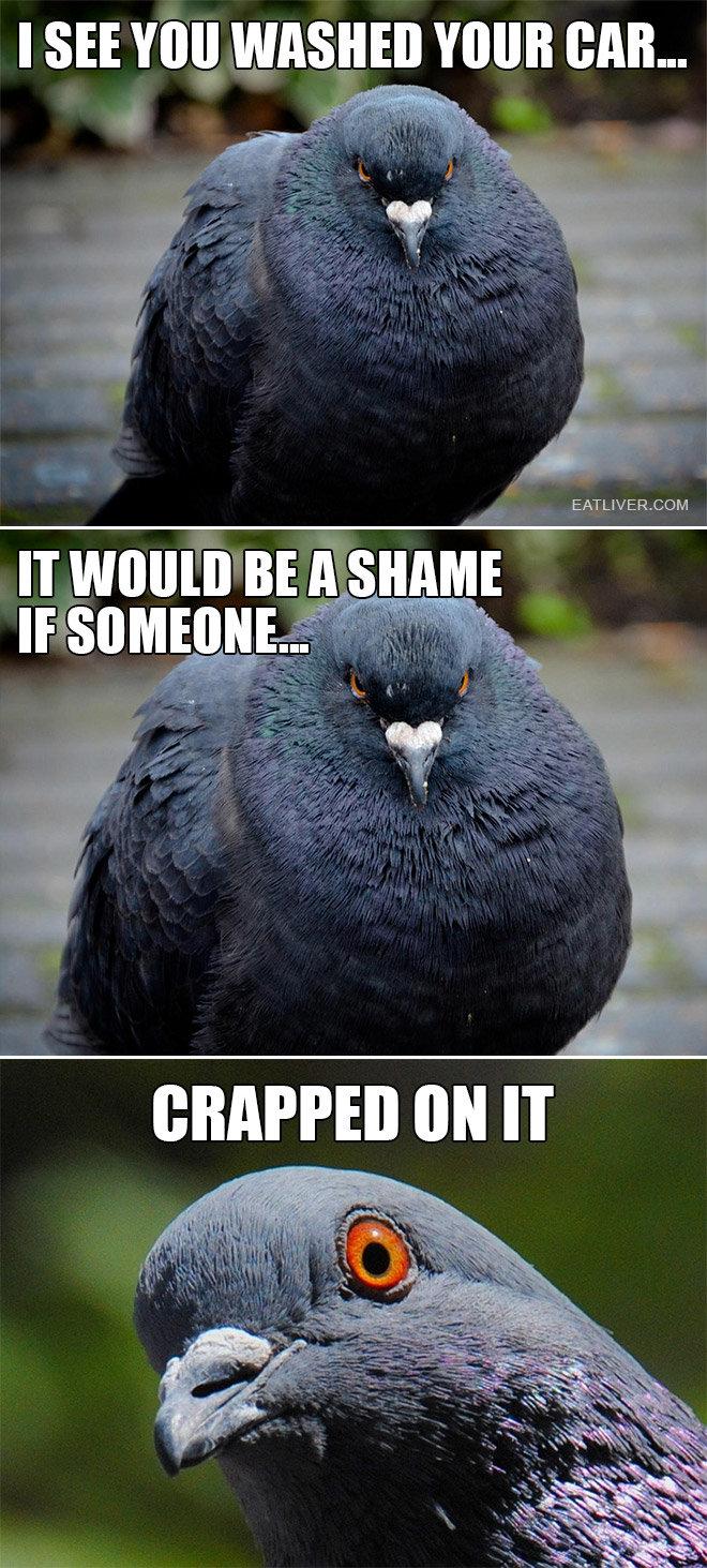 "Poop 3. Source: eatliver. I SEE VII"" WASHER VINE BAH.... Only bird related thing I've got Mcburd, I didn't think you could sing!"