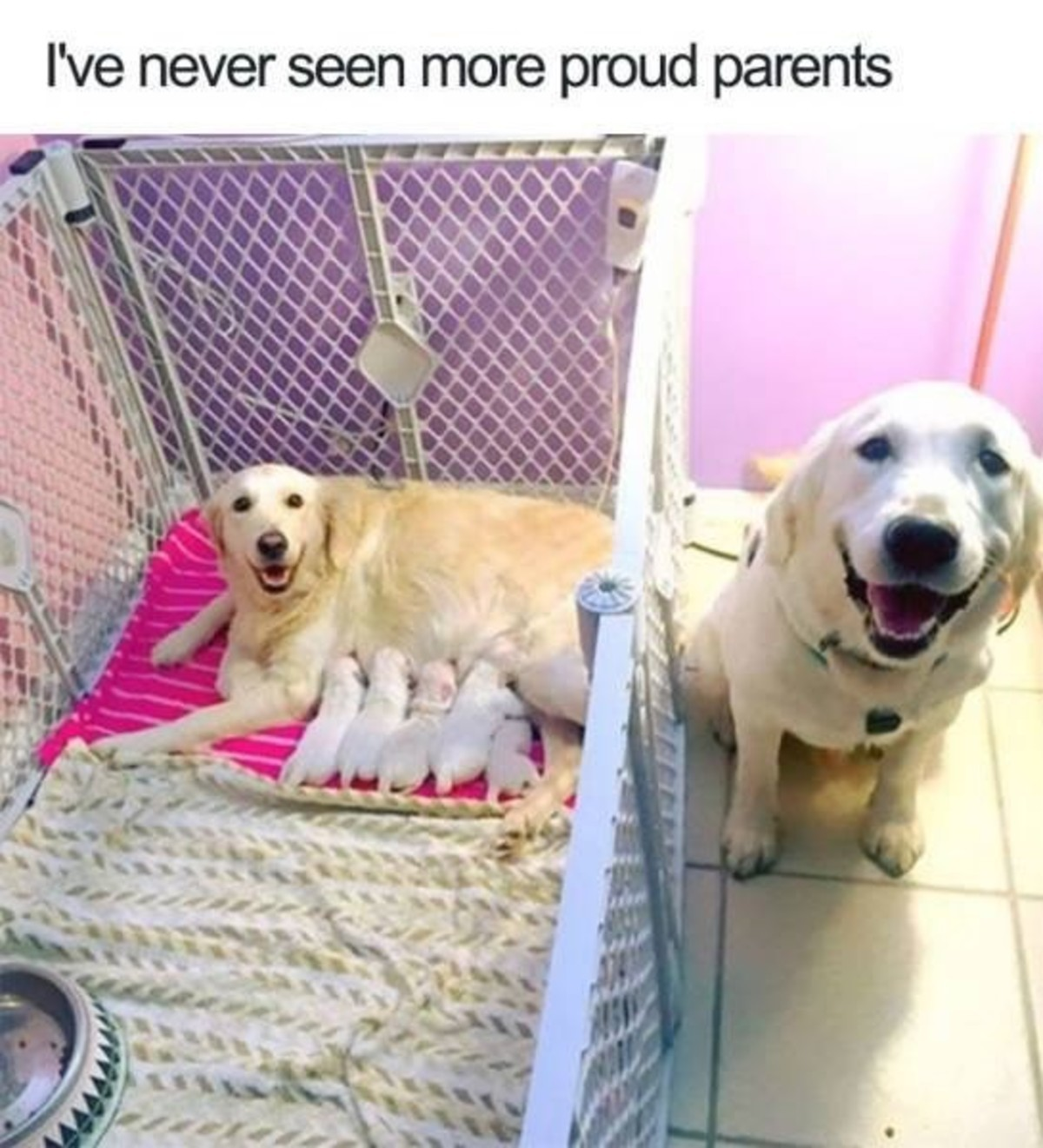 """Proud parents. .. """"I was a good boy, and I love my good girl, and then MORE good boys just appeared. ISNT THAT SO COOL HOOMAN?"""""""