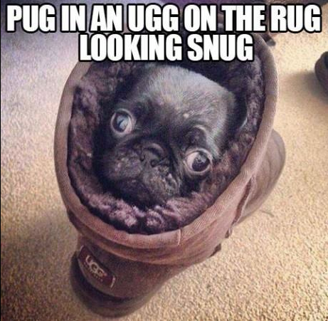 puglee. . on 'nlli Mill all. Pugs. <3