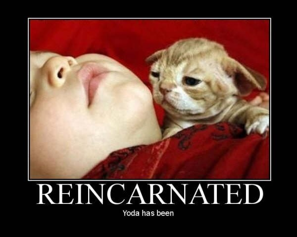 Reincarnation. Roll picture, you'll reincarnate as image...