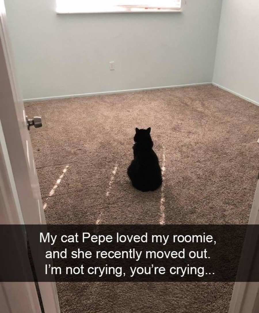 Sad Pepe. join list: QtStuff (674 subs)Mention History.. Finally my own room.