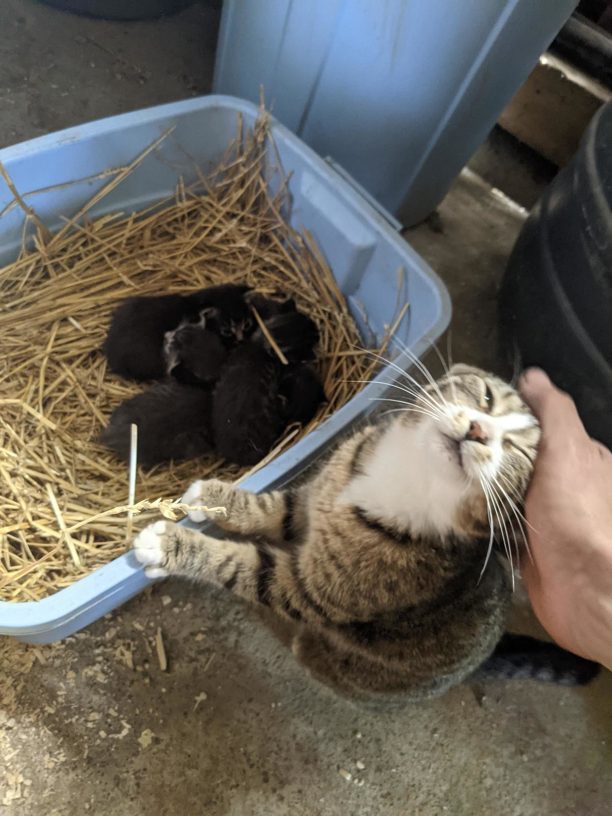 """""""see? they are good kitties! :)"""". join list: DoseOfCuteness (929 subs)Mention Clicks: 162664Msgs Sent: 2510997Mention History.. WHY ARE THEY BLACK? Just kidding, very nice"""