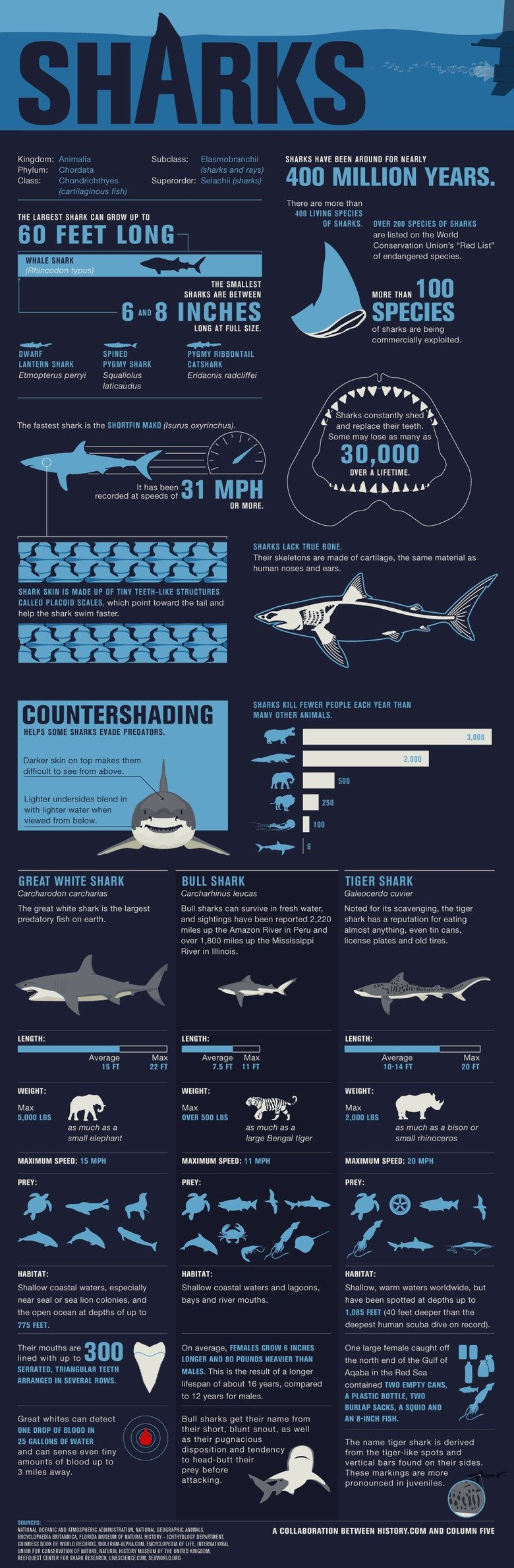 Sharks, the most BAMFers out there.. . Kingdom Phylum: Class: THE LARGEST SHARK DAN MOW UP N 60 FEET LONG SHARKS HAVE DEER FDR 400 MILLION YEARS. There are more
