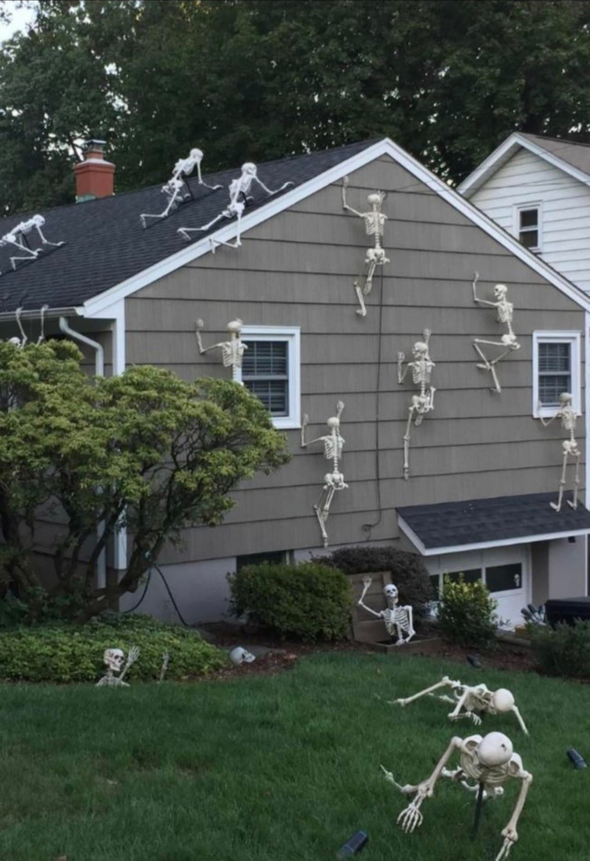Skeleton Invasion. .. These skeletons are all running in fear of cat because he hav the bone hurting juice