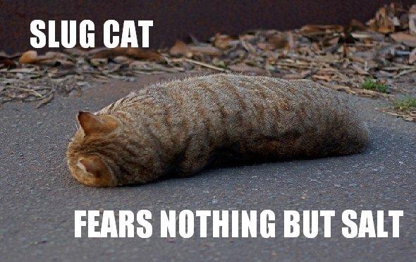 Slug Cat. . rum: BIIT FEARS