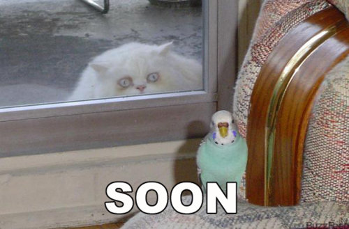 Soon.... .. magcargo is the cat, the bird and the dog magcargo is all