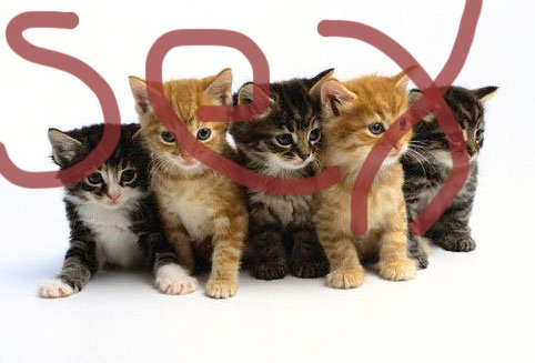 SUBLIMINAL SATAN!. i was just surfing cute kitten pics.net when i spotted this little number turning our young women into raging harlots!.. cmon ppl this is funny