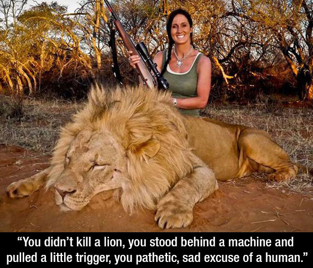 """T. . You didn' t kill a lion, you stood beehind a meening and pulled a little trigger, you pathetic, sad excuse of a human."""". or, and just going out on a limb here, yes, she did kill a lion. She used the product of her species greatest predatory quality, our intelligence and use of too"""