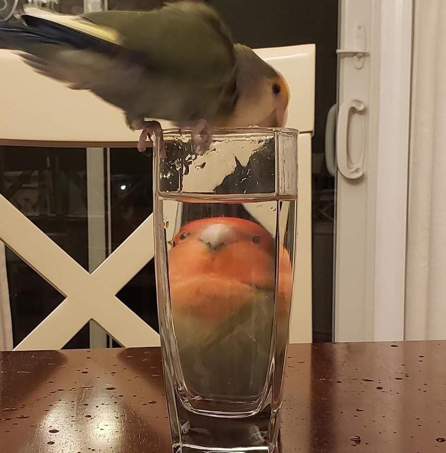 take a sipp. .