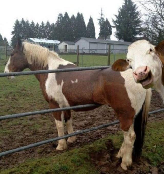 "take an pic fast!. feel bad for the horse but still it´s funny as fck xD ""take an pic! look at this idiot!"".. an?"