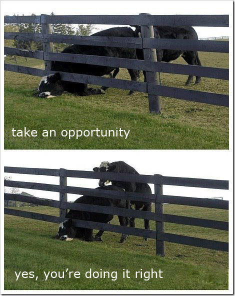 take an opportunity. . yes, youre doing it right. he's taking life by the horns.