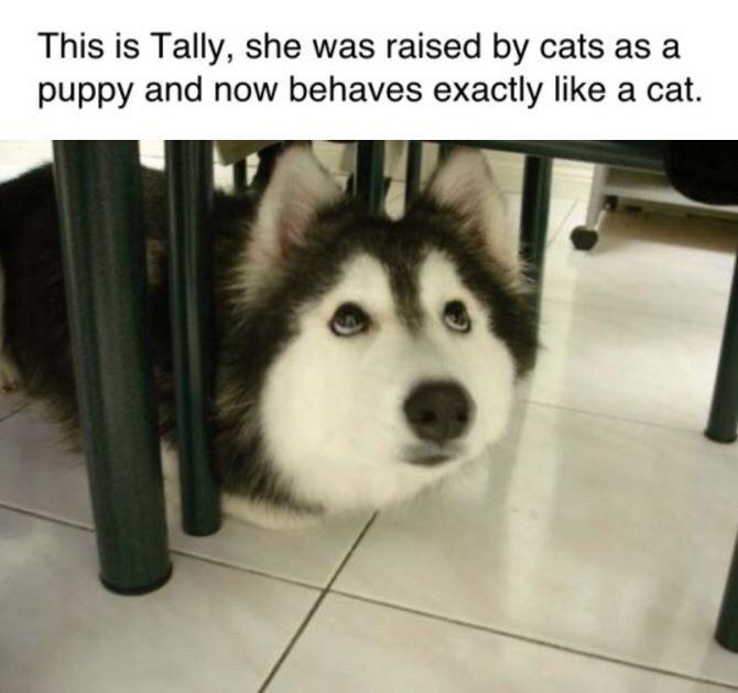 Tally. .. I need 4 of them