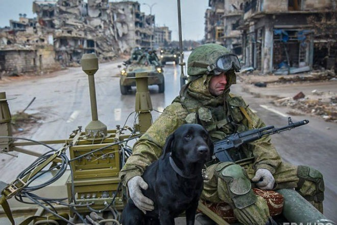 Tank Dog. .. The love between doggo and man may very well be the cause of world peace one day. After removal of kebab.