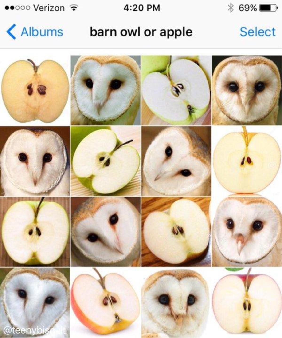 """Tap Tap Tik Tak. . II: -can Verizon Git"""" 4: 20 PM t 69% -3 4 Albums barn owl or apple Select. Someone could've just whacked some golf balls into a potato field and nobody noticed until they were in pre-made products."""