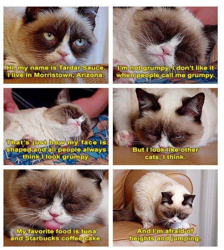 "Tarrrrrrd. Grumpy cats not so grumpy. i( iir, in Morristown; Arizona. i' ii,' . iaa. ii:"" ijhy people always ttry, stator's tgod . t. a zinc: : offer' ii. cake-"