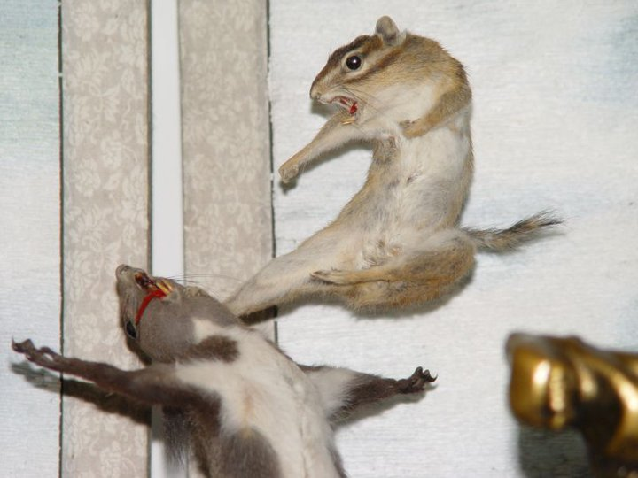 Taxidermy win. Whoever made this needs a medal.. epic. I need to go get some squirrels off the street and do this. You ever hit a squirrel with an 18-wheeler?
