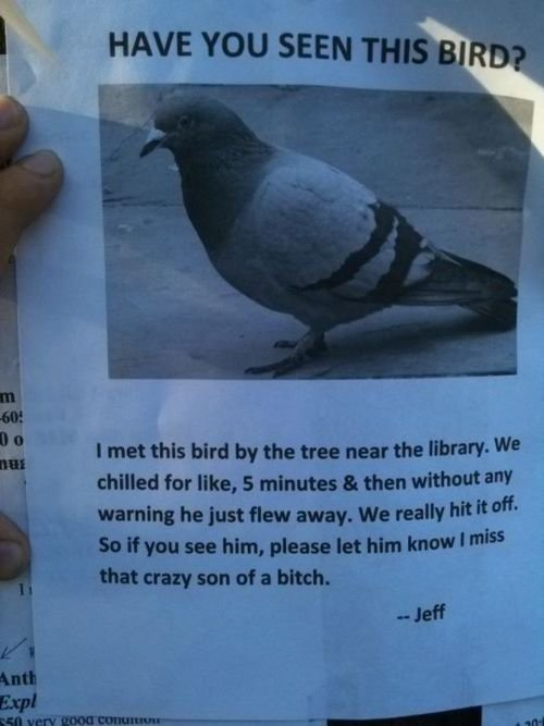 That Feel?. That crazy son of a bitch. I HAVE YOU SEEN ' i. viii' iii. . I met this bird try the tree near the Iisrawr We milled for like, s minutes a. then wit