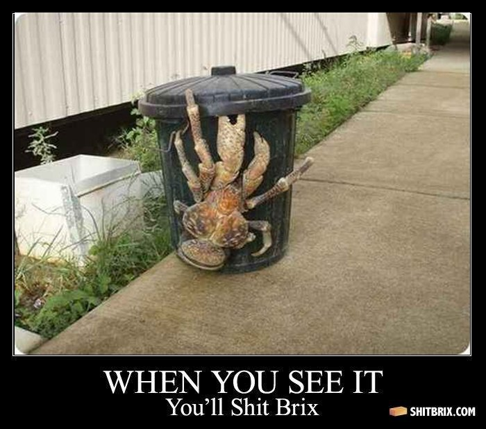 "that is if you see it. . SEE IT You'"" Shit Brix {. cnm. maybe u should get those big ass claws of that crab and cut those fukin weeds"