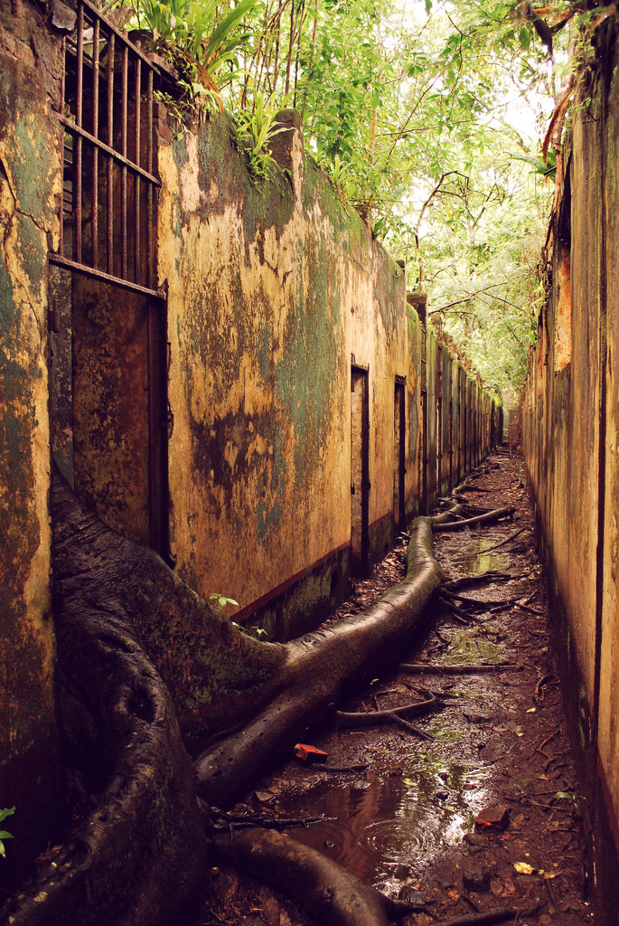The abandoned prison. .. The tree is escaping someone stop it!