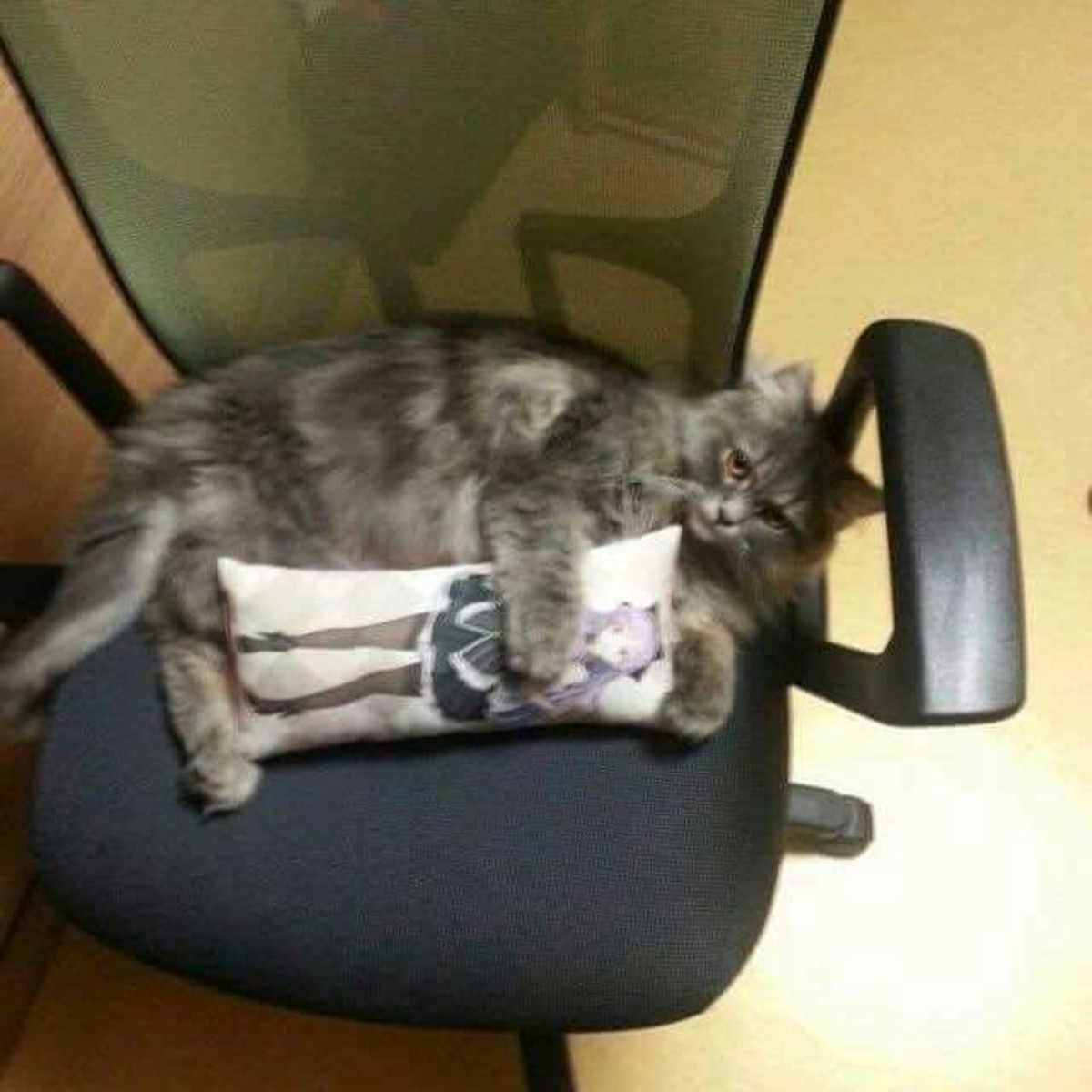 The average FJ'ers cat. .. what do you mean
