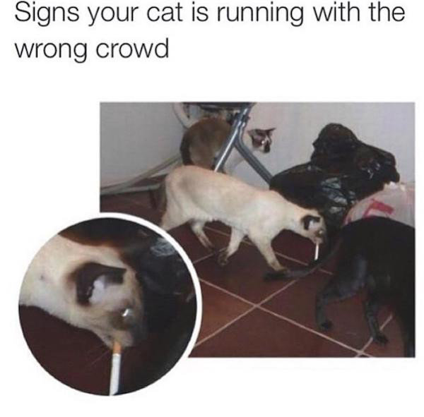 The bad crowd. . Signs your cat is iil! : with the wrong crowd