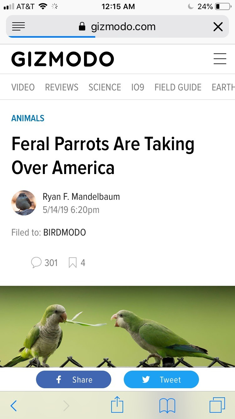 The bees. Basicly we (California) killed the regular species. Sad but it happens a lot. Good/weird news. Some parrot/parakeets very unnatural to the habitats ar