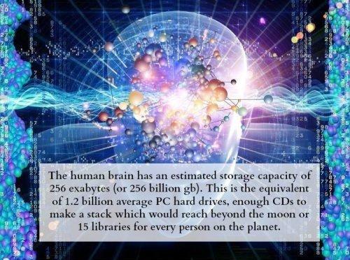 The brain. . The MAM','! Brain has an : capacity' ! Fitr, ( . This is the. So basically my porn folder
