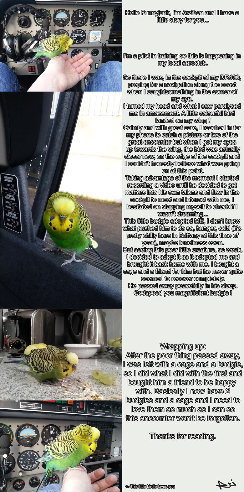 The budgie that adopted me. As incredible as it may sound, this is a true story (pictures prove it). Sorry for the quality of the pictures but a PNG was too lar