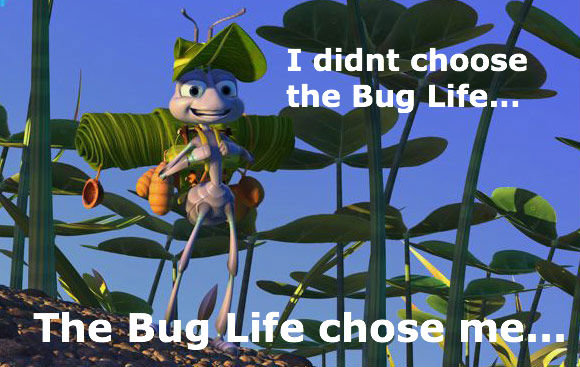 the bug life. OC by me sorry if i got spelling wrong. r - I didnt choose alh, st. the Bug Life...
