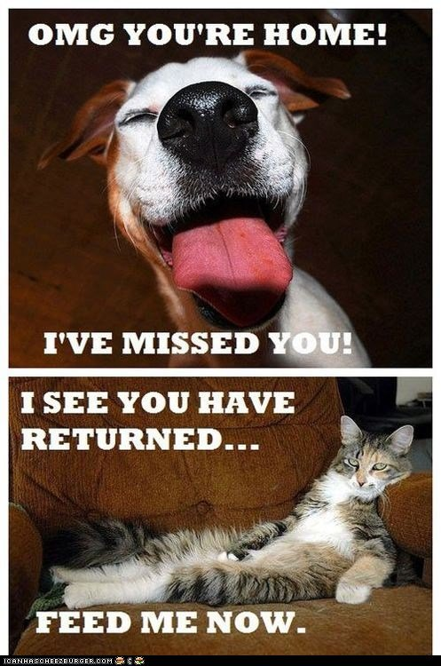 """The Difference Between Cats and Dogs. . OMG YOU' RE HOME! I' MISSED I as You HAVE I roii"""" iial 'idia: Now.. Not to """"be that guy""""... But... Not all cats are like that I got mine when I was 3. I only have a handful of memories before my memory of picking him o"""