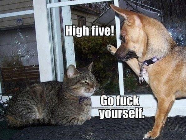 """The Difference Between Dogs And Cats. """"Pussy!"""" """"Bitch!"""".. Having owned a cat for 14 years, this really cracked me up. Too much truth"""