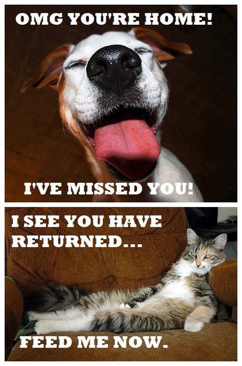 The difference between Dogs and Cats. Subscribe for moar !!. OMG YOU' RE HOME! I SEE YOU HAVE RETURNED.... I'm guessing you're a dog person That's cool too