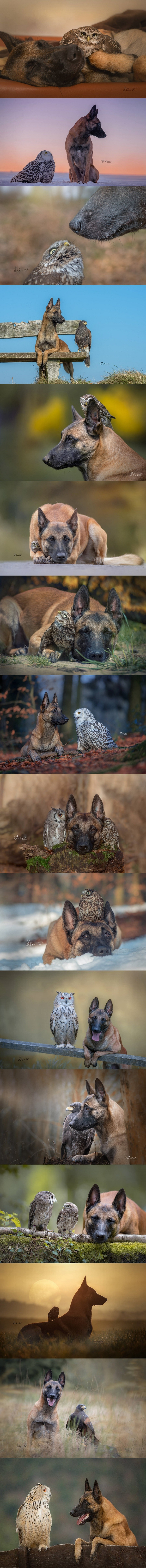 the doogo and the burd. join list: Suesskram (451 subs)Mention History.. When you were on vacation for two weeks and now everyone has a dog friend