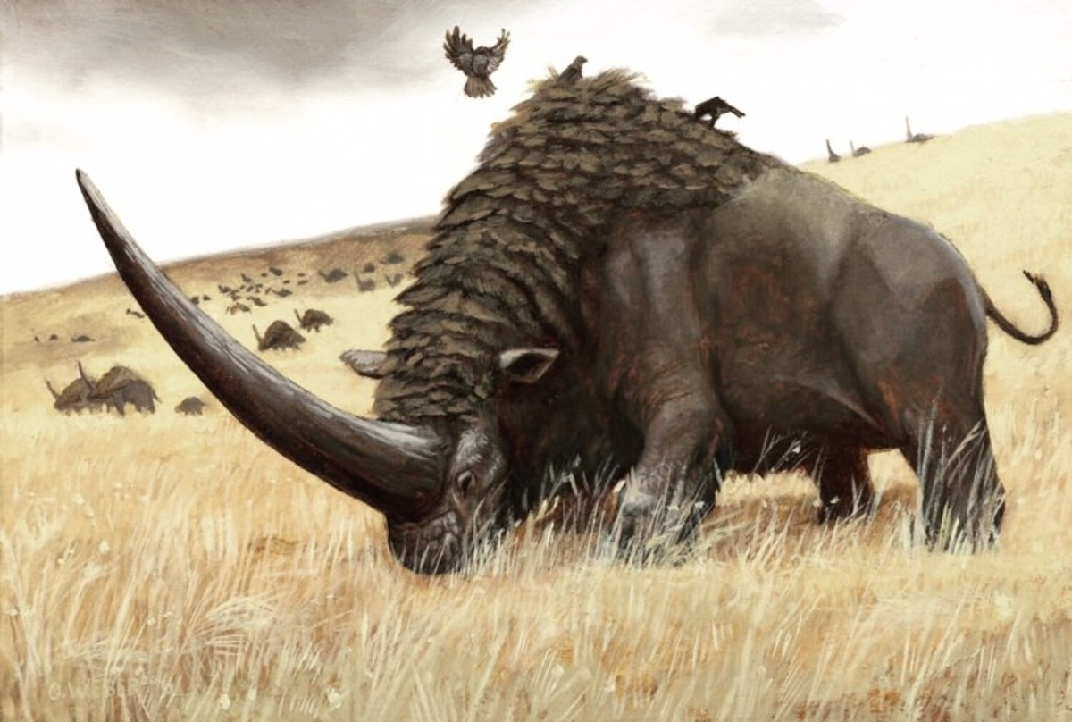 The Elasmotherium Sibiricum. This magnificent beast was an ancestor of the modern rhinoceros, with a range throughout Eurasia. Recently it was discovered that t