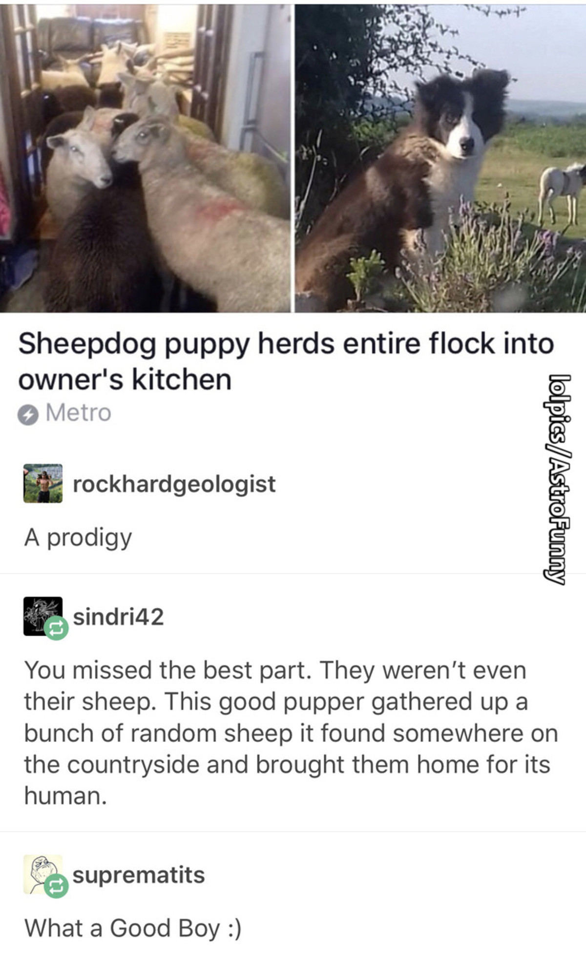 The Goodest Boy. join list: CuteDogs (234 subs)Mention Clicks: 4485Msgs Sent: 28713Mention History. Sheepdog puppy herds entire flock into owner' s kitchen 9 Me