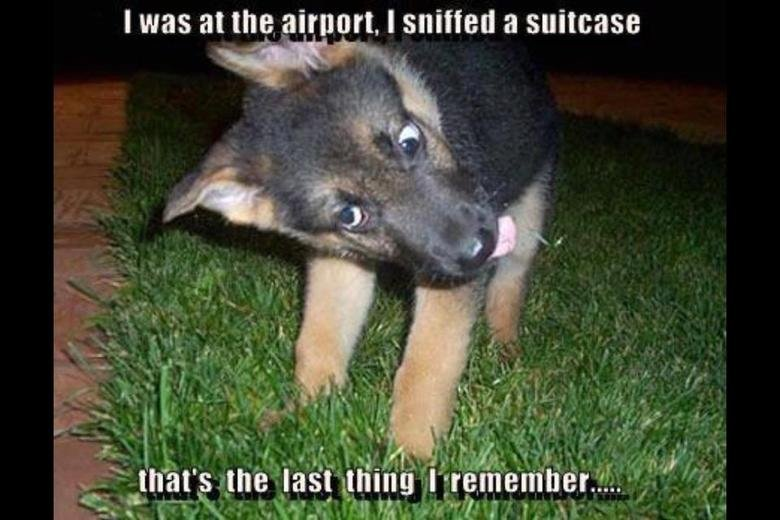 The joys of being a security dog. . I Was at [ ., t' pt) r' t, I sniffed a striptease ity. Yes lightbulb, I also sniffed a striptease.