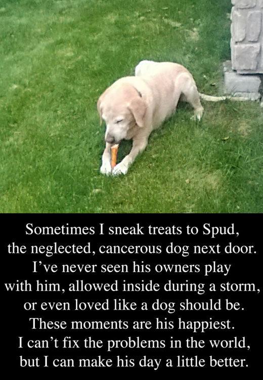 The neglected dog next door. The neglected dog next door… . Sometimes I sinead treats to Spud, the neglected, cancerous dog next door. lite never seen his owner