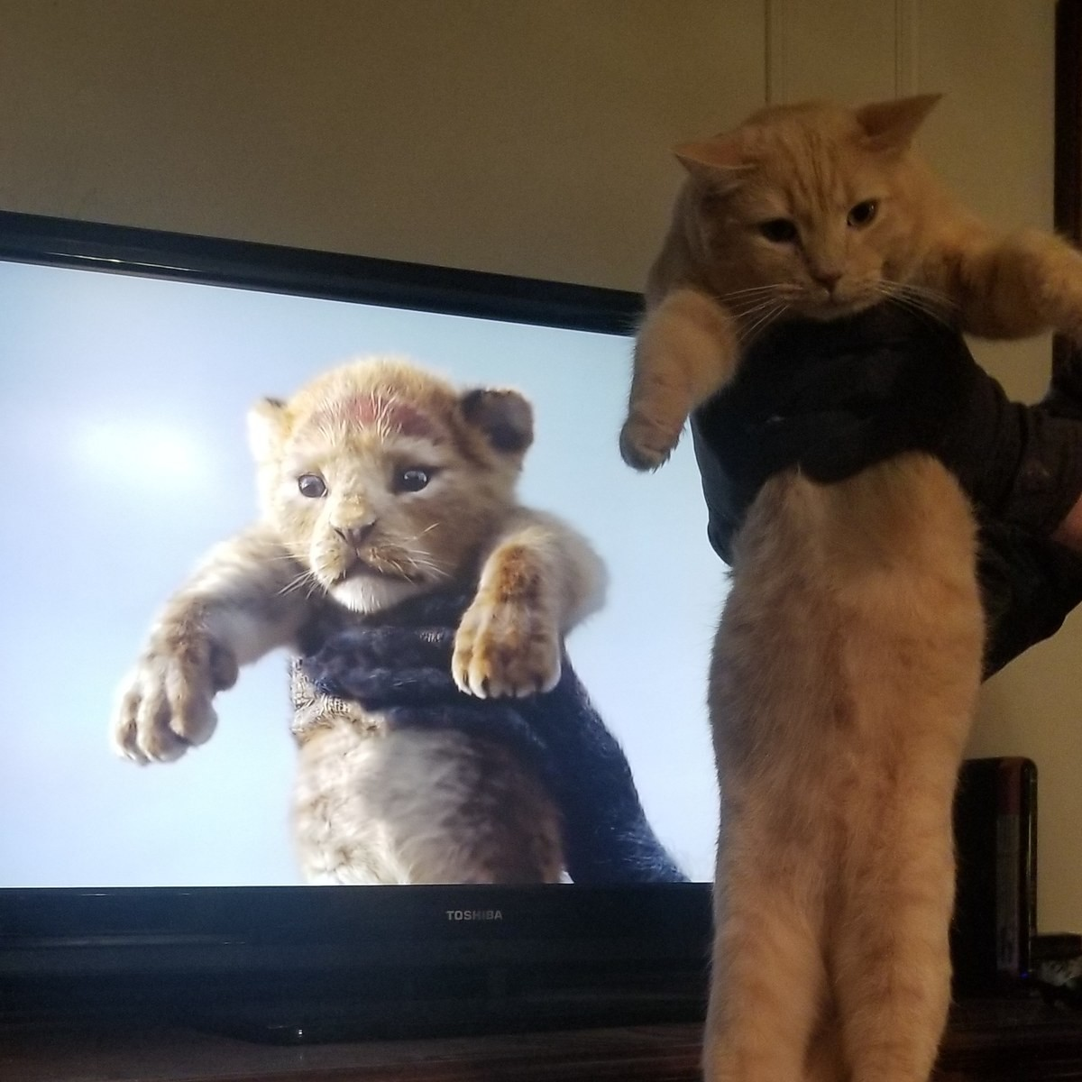The True Lion King. Everyone post your cats! I know I wasn't the first to do it but I want to see who does it best..