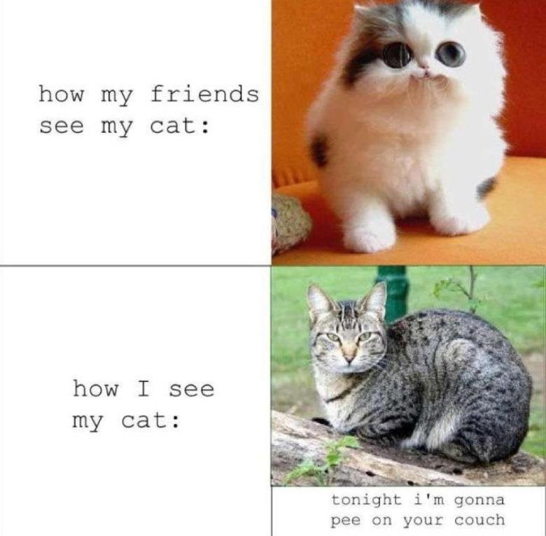 The Truth. Description. how my friends; see my cat: i' m gamma pee on your couch