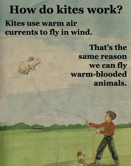 The Truth. Not mine, thought I would share. Kites' use warm air. utorrents to fly in wind. That' s the e. firstr-., d:, agame reason we can fly attr animals.