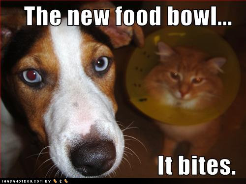 THE NEW FOOD BOWL. Mr Mousman freaked when he saw this lol. Thenew mod howl.... What a stupid dog
