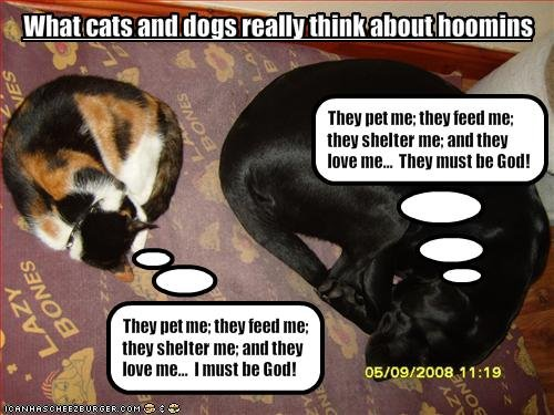 "the difference between cats and dogs. title says it all difference. and M small 'miimii"" THE!  HITEI HE HEN THE]"