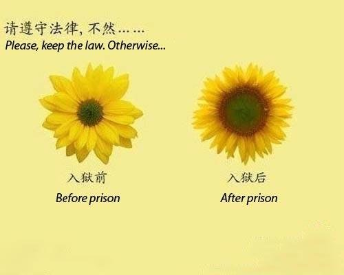 The Law. wait for it. Wait for it !. Please, keep the law, Otherwise, Before prison After prison. lol, I don't know if i'm laughing at the right thing, but in my mind it painful and hilarious! =P