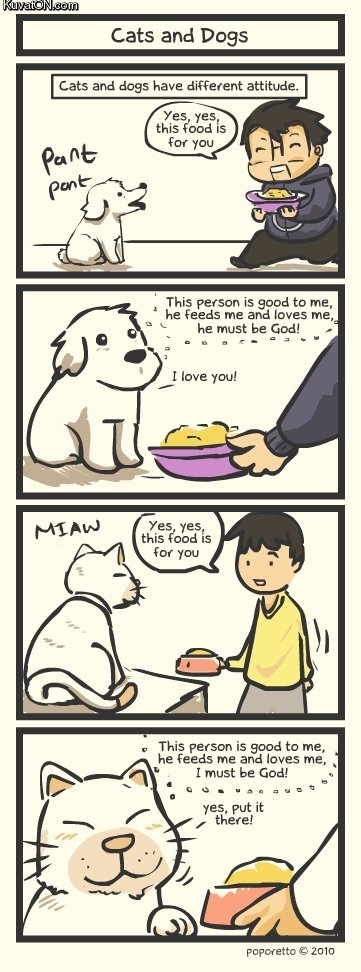 The difference between Cats and dogs.. . Cats and Dogs Cats and dogs have different attitude, Xes yes this fund is This person is good to me, he Feeds me mid lo