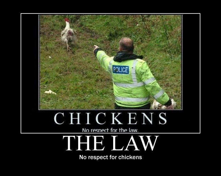 The Law. . Mn re. -weft fnr the law. No respect for chickens. that's just what the want us to believe