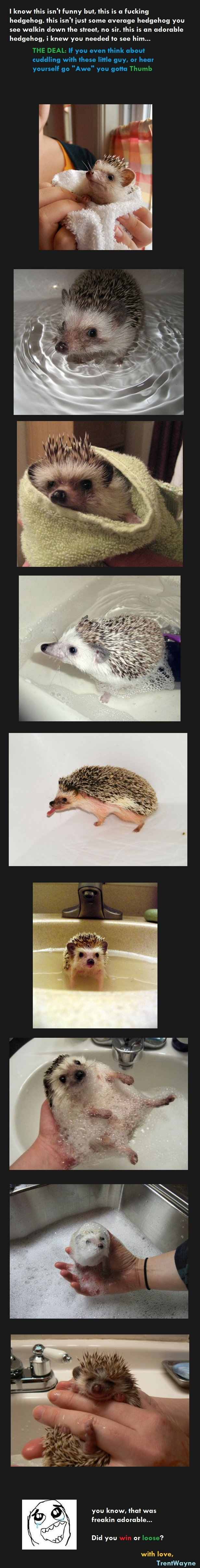 The Deal: Cute Hedgehog. thank you, i take no credit for this! spare a thumb, or read the description..oh wait already did 1 why not the other.. Lose not loose
