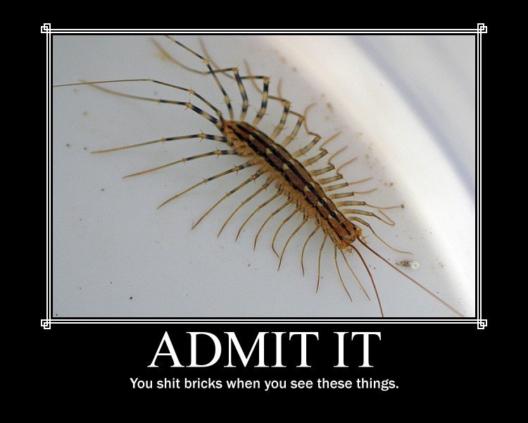 The Bug. I cringe every time I see this picture.... Lal. . rollar, IT You shit bricks when you see these things.. its scary when they come out of NOWHERE