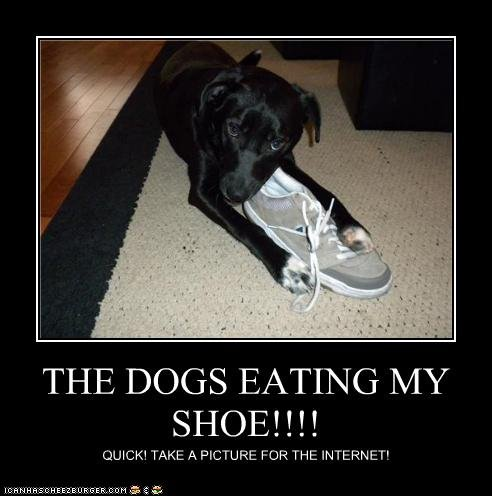 the dog. . OTIE DOGS EATING h/. i have those shoes