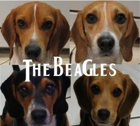 the beagles. they howled more than any dog in history..