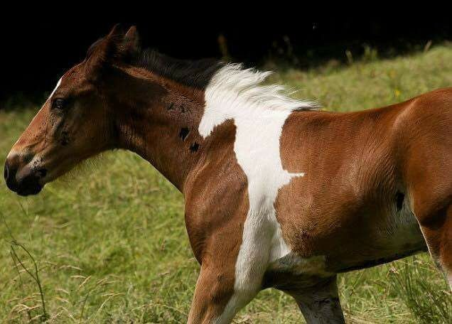 """Theres a Horse In This Horse. join list: Lewds4DHeart (1603 subs)Mention History join list:. As usual, posting some kind of lewds- bestiality this time, it seems. """"White horse fully inside a brown horse"""""""